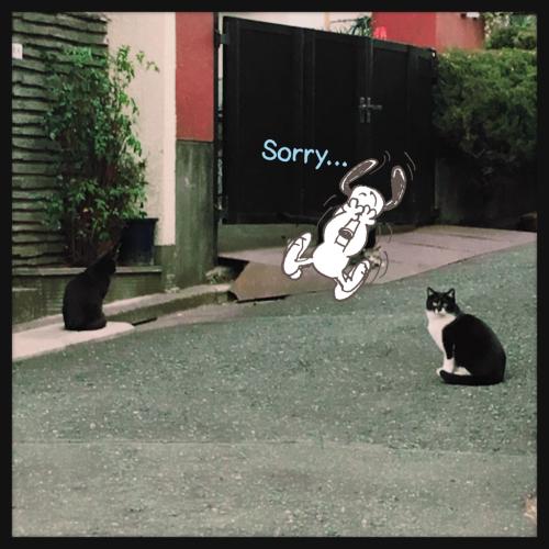 猫の日_e0123401_20021146.jpg