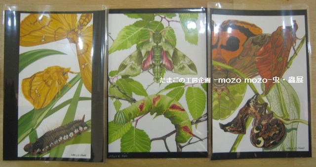 たまごの工房 企画展 「-mozo mozo-虫・蟲 展」 その8 _e0134502_1929359.jpg