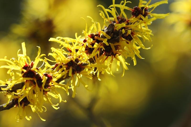春を呼ぶ黄色_e0364223_21244871.jpg