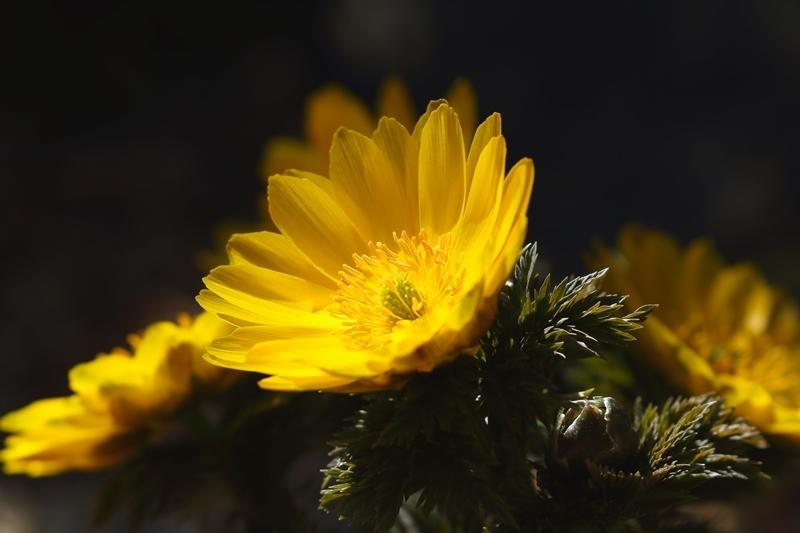 春を呼ぶ黄色_e0364223_21263085.jpg