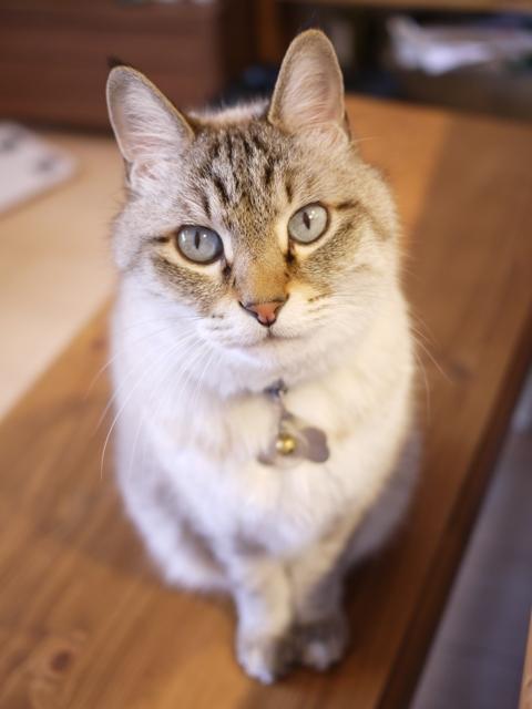 猫のお留守番 ちびくん編。_a0143140_21315842.jpg