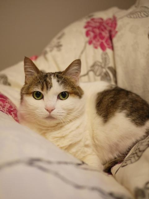 猫のお留守番 さくらちゃん編。_a0143140_2141138.jpg