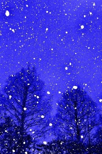 冬景_b0314043_09383433.jpg