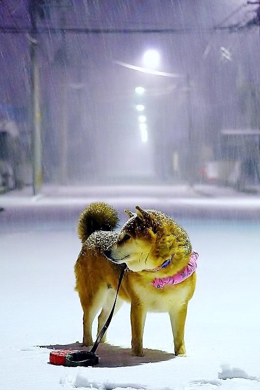 冬景_b0314043_10065408.jpg