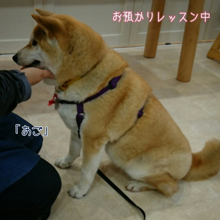 2月22日(水)…『犬の生活論』出席のためお休み_d0256356_01283741.jpg