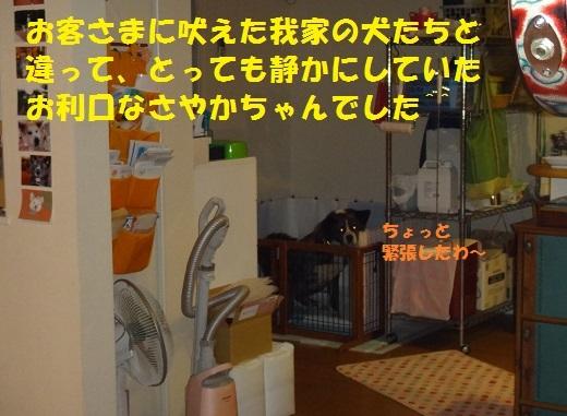f0121712_14173322.jpg