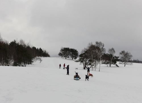 菅平で雪遊び_e0192217_10571423.jpg