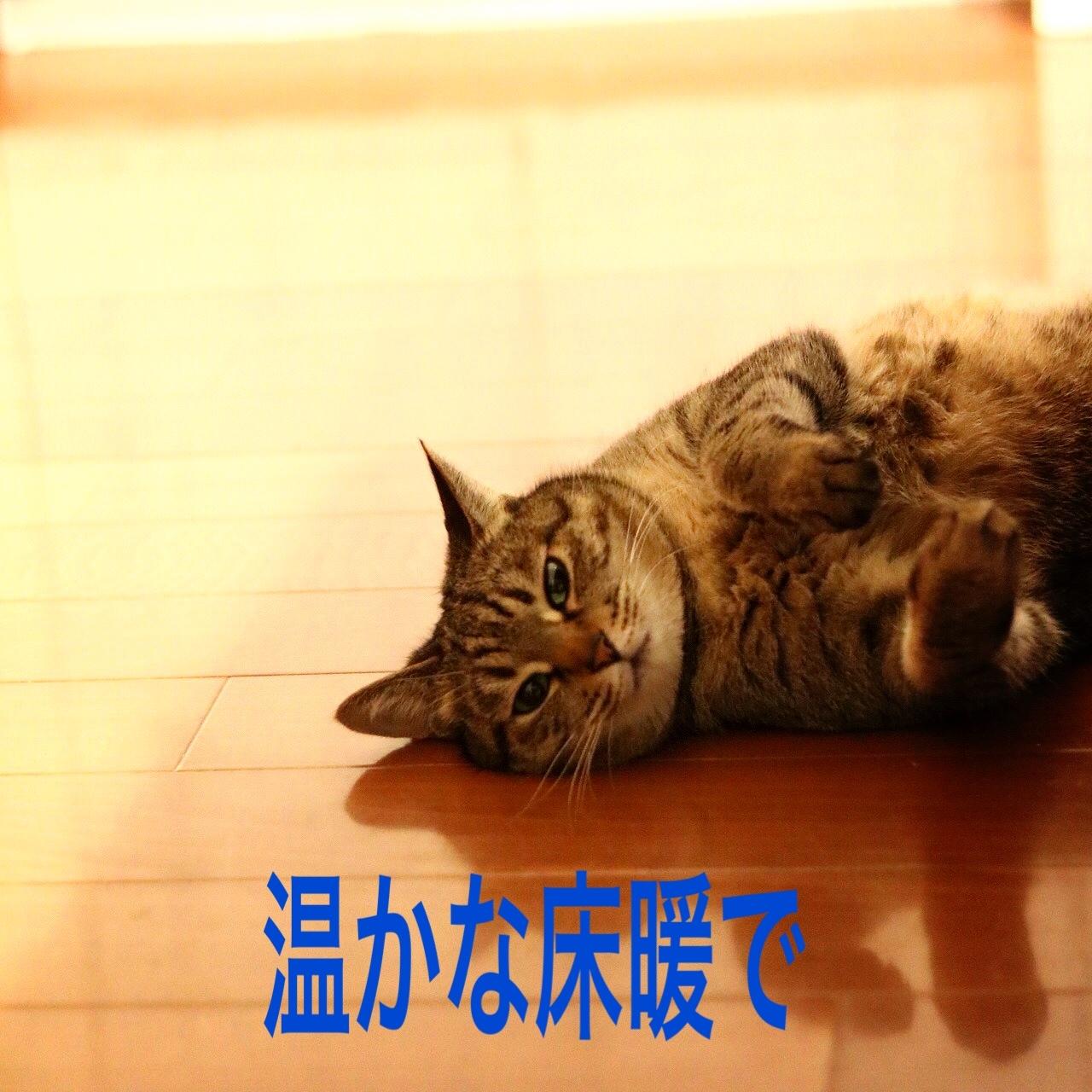 にゃんこ劇場「ニャンコの日の夕ごはん」_c0366722_05413341.jpg