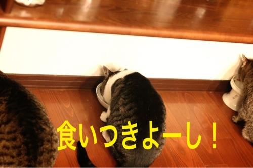 にゃんこ劇場「222の食事会続き」_c0366722_22502684.jpg