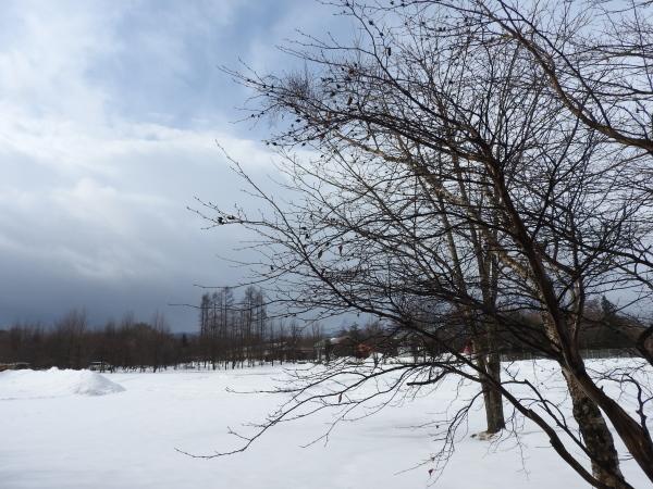 週末の天気と気温(2月4週目)とクローズのお知らせ_b0174425_19233152.jpg