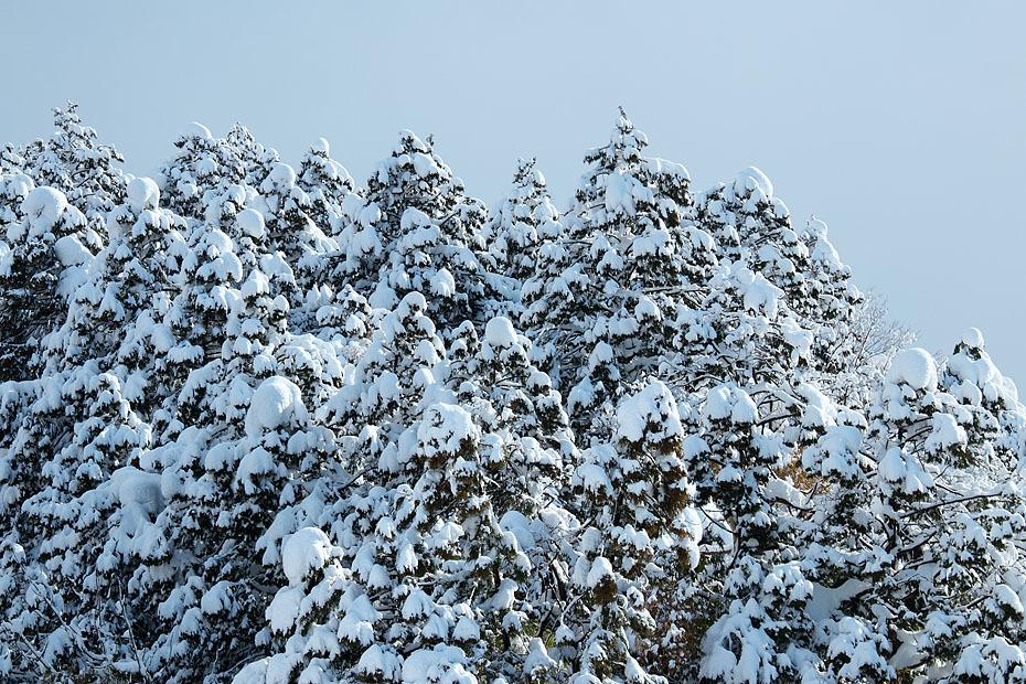 大雪上がる_c0067040_22173673.jpg