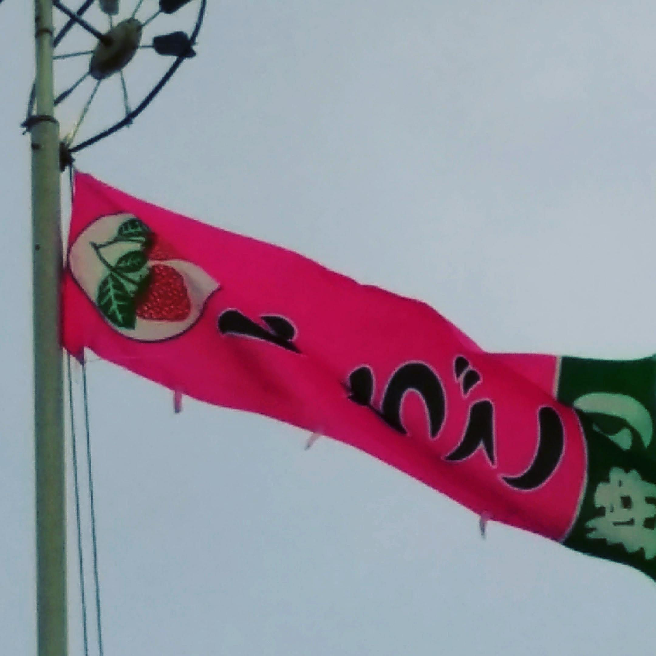 いちご狩り この旗目指してね_e0219448_08001547.jpg