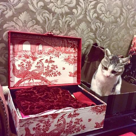 猫ちゃん用の「耳出しニット帽」をオーダー♪_b0051666_07482206.jpg