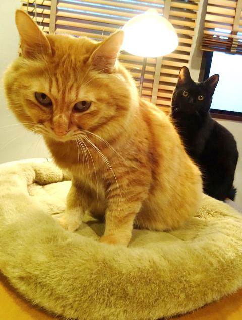 猫ちゃん用の「耳出しニット帽」をオーダー♪_b0051666_16322949.jpg