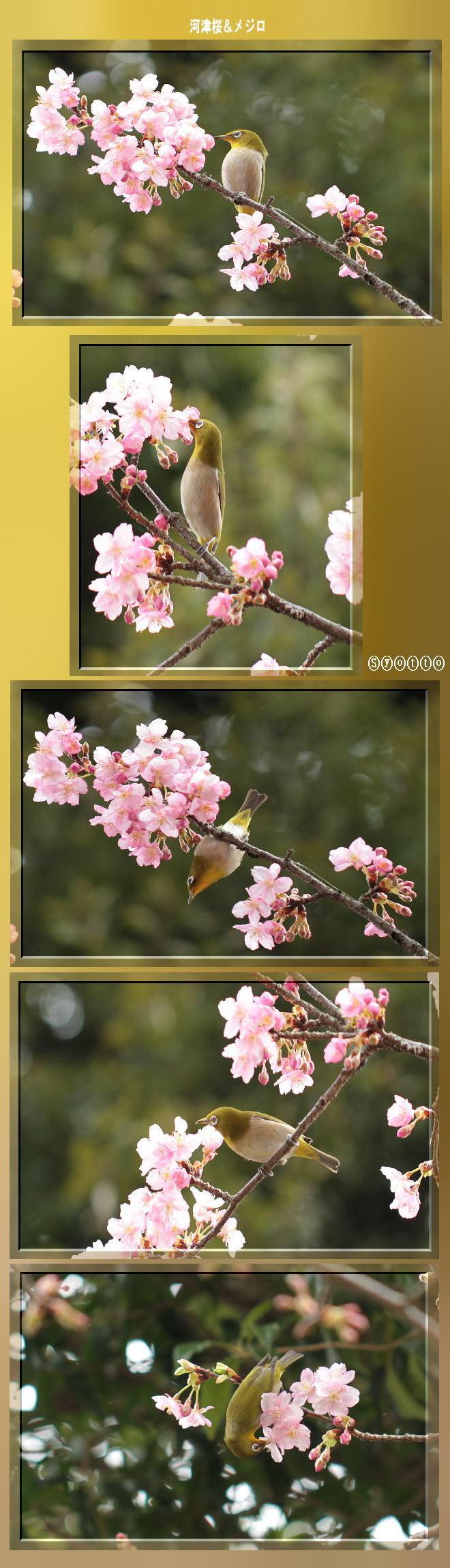 f0164592_19450571.jpg