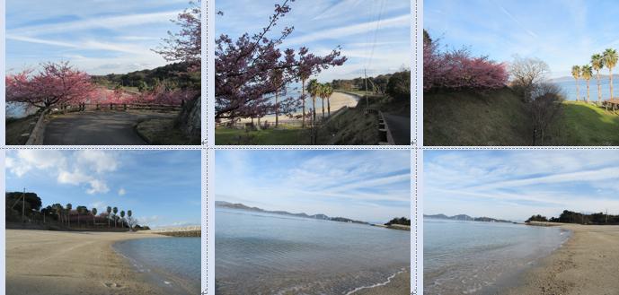 今治市大角海浜公園の水仙と河津桜と多くの種類の春の雲…2017/2/18_f0231709_18303370.png