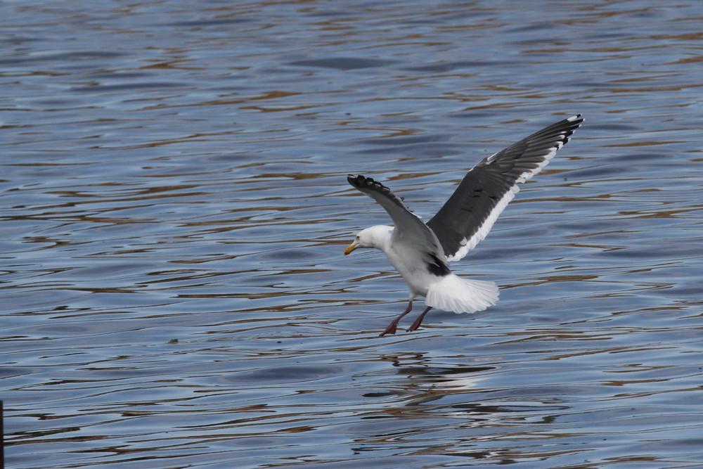 今日の鳥見(2017年2月24日)_f0235311_18363128.jpg