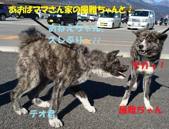 f0121712_08130146.jpg