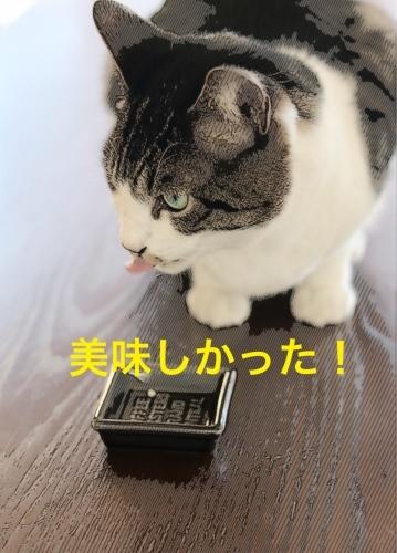 にゃんこ劇場「寿司!食いね〜」_c0366722_16545967.jpg