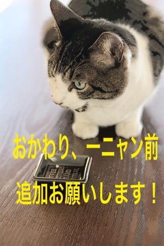 にゃんこ劇場「寿司!食いね〜」_c0366722_17041970.jpg