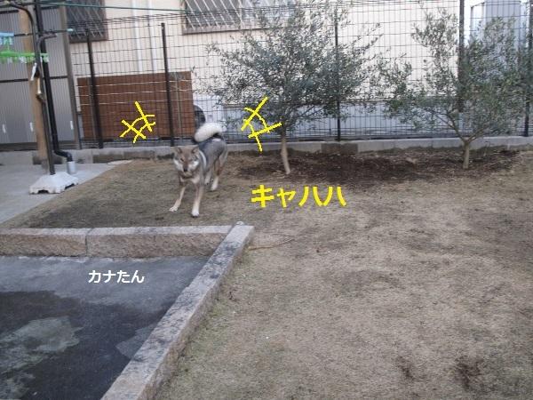 f0143123_10180678.jpg