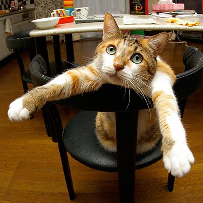 猫の日ミルクさん祭【3/2写真追加】_a0028451_03004739.jpg