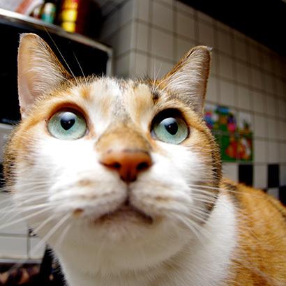 猫の日ミルクさん祭【3/2写真追加】_a0028451_03004748.jpg