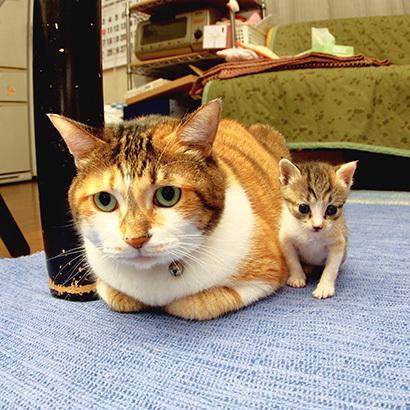 猫の日ミルクさん祭【3/2写真追加】_a0028451_03004780.jpg