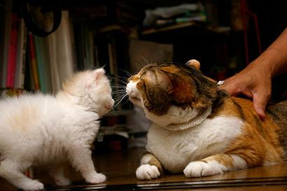 猫の日ミルクさん祭【3/2写真追加】_a0028451_03004847.jpg