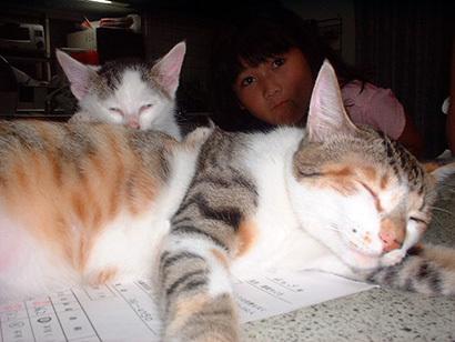 猫の日ミルクさん祭【3/2写真追加】_a0028451_03004852.jpg
