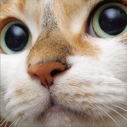 猫の日ミルクさん祭【3/2写真追加】_a0028451_03004861.jpg