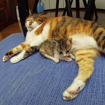 猫の日ミルクさん祭【3/2写真追加】_a0028451_03004863.jpg