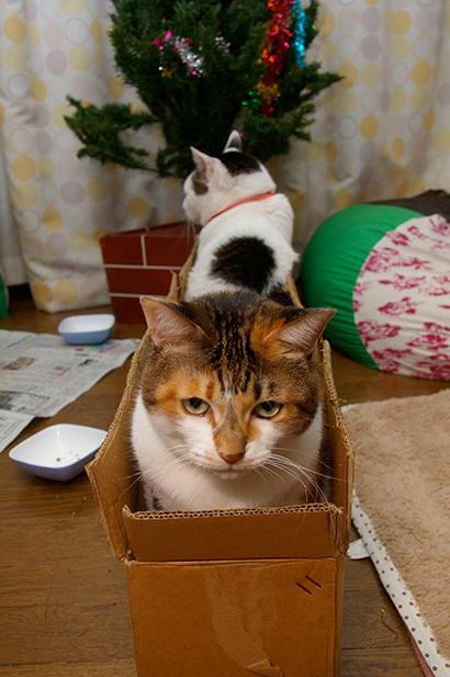 猫の日ミルクさん祭【3/2写真追加】_a0028451_03004889.jpg
