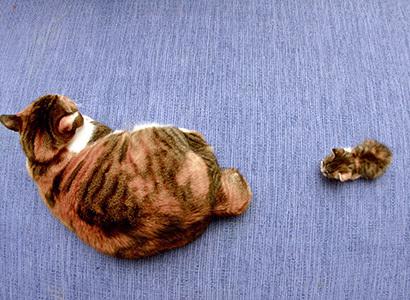 猫の日ミルクさん祭【3/2写真追加】_a0028451_03022855.jpg