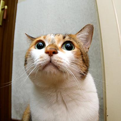 猫の日ミルクさん祭【3/2写真追加】_a0028451_03022966.jpg