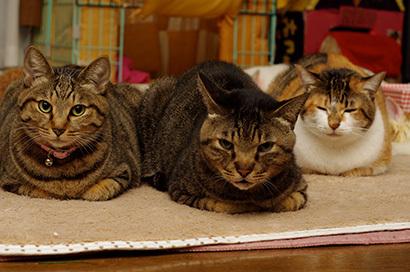 猫の日ミルクさん祭【3/2写真追加】_a0028451_03022987.jpg