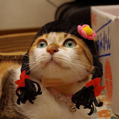 猫の日ミルクさん祭【3/2写真追加】_a0028451_03023008.jpg