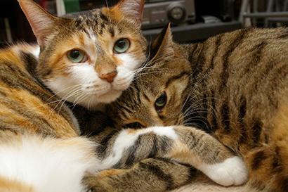 猫の日ミルクさん祭【3/2写真追加】_a0028451_03023040.jpg