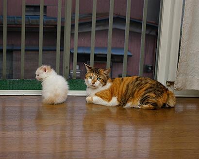 猫の日ミルクさん祭【3/2写真追加】_a0028451_03065443.jpg