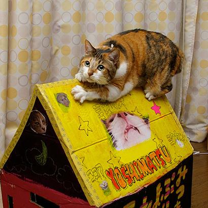 猫の日ミルクさん祭【3/2写真追加】_a0028451_03065464.jpg