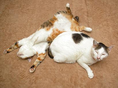 猫の日ミルクさん祭【3/2写真追加】_a0028451_03065488.jpg