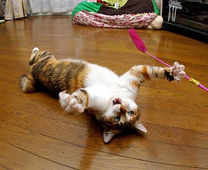 猫の日ミルクさん祭【3/2写真追加】_a0028451_03065507.jpg