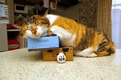 猫の日ミルクさん祭【3/2写真追加】_a0028451_03065509.jpg