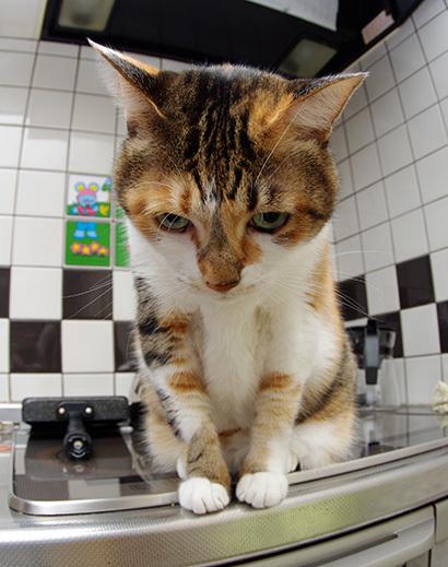 猫の日ミルクさん祭【3/2写真追加】_a0028451_03065522.jpg