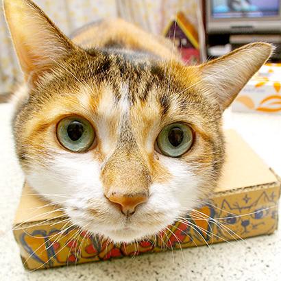 猫の日ミルクさん祭【3/2写真追加】_a0028451_03065583.jpg
