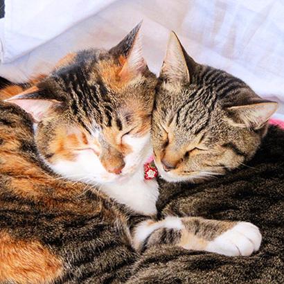 猫の日ミルクさん祭【3/2写真追加】_a0028451_03083613.jpg