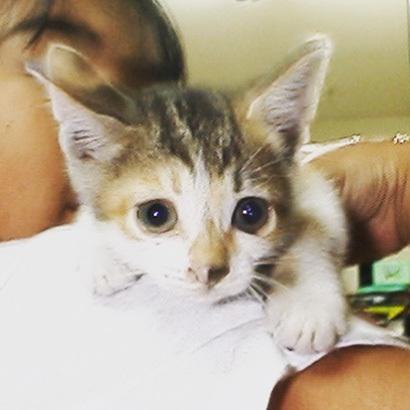 猫の日ミルクさん祭【3/2写真追加】_a0028451_03083652.jpg
