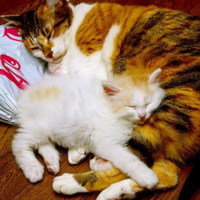 猫の日ミルクさん祭【3/2写真追加】_a0028451_03083655.jpg