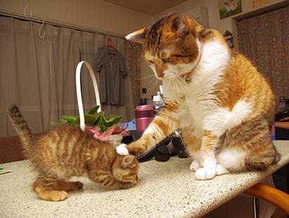 猫の日ミルクさん祭【3/2写真追加】_a0028451_03083663.jpg