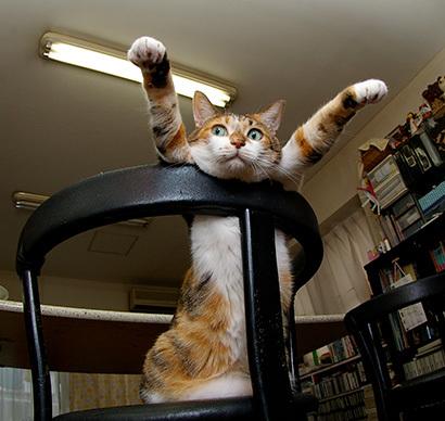 猫の日ミルクさん祭【3/2写真追加】_a0028451_03083689.jpg